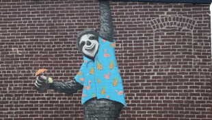 A Sloth Inspires Fundraising For Public Art