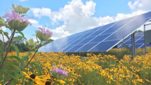 Randolph, Henry Counties Aim To Make Solar Farms Home For Pollinators