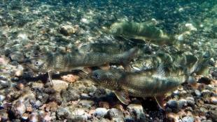 States To Reduce Salmon, Trout Stocking In Lake Michigan
