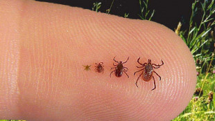 Tick-borne Illness On Rise In Hoosier State