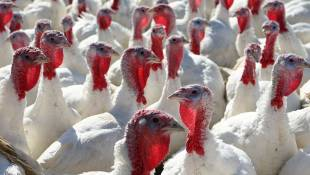 More Than 400K Birds Destroyed To Contain Avian Flu Outbreak