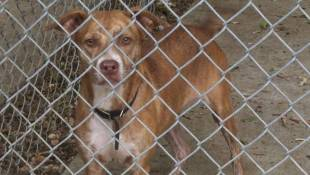 Texas Animal Shelters Send Dogs To Indianapolis For Adoption