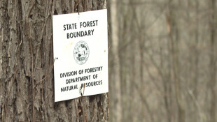 State To Study Logging, Forest Management Over The Summer