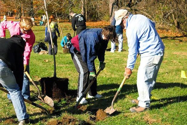 City Marks Milestone In Tree Plantings