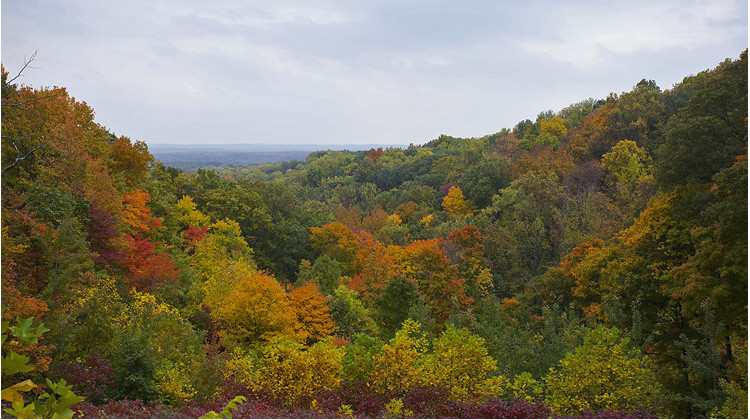 Fall Foliage in Indiana