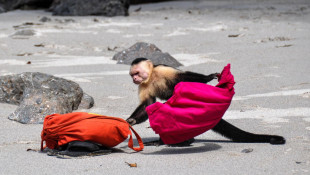 Capuchin Monkeys in Costa Rica Play Tourists for Food