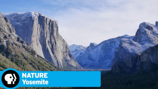 YOSEMITE on NATURE | Official Trailer | PBS