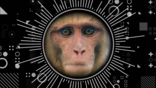 What Do People And Monkeys Have In Common?